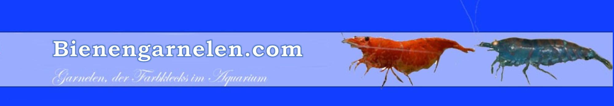 bienengarnelen.com